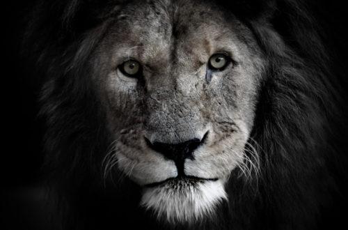 Article : La Légende du Roi Wazal (première partie)