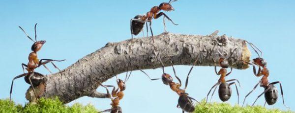 Intelligence collective des fourmis, l'un des meilleurs |@Afropolitanis