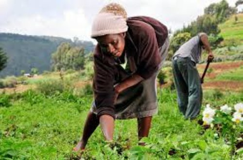 Article : Accessing market by smallholder farmers in Ghana